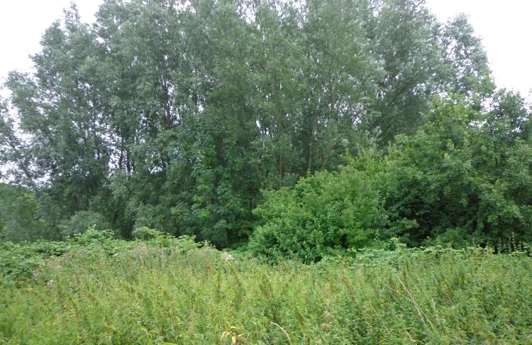 Boomgaard aan de Akker in Ommeren